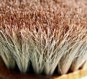 Scrub brush  Photo by papalars/Andrew E Larsen on Flikr