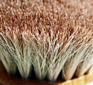 Scrub brush  Photo by papalars/Andrew E Larsen on Flikr
