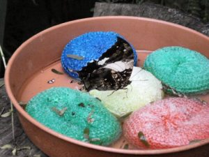 Scouring pads  Photo by Kake Pugh on Flikr